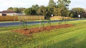 Wells Road Tree Planting