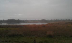 Wetlands Lake